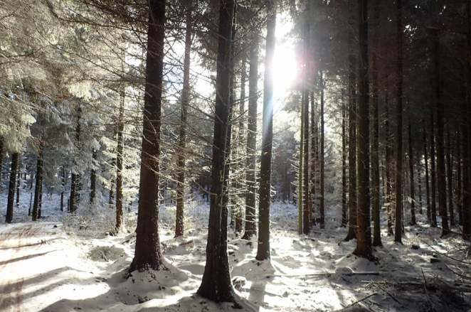 llan snow forest