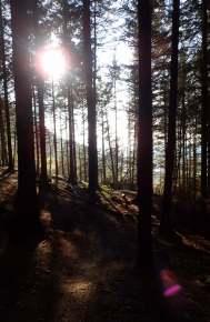 summer forest llan